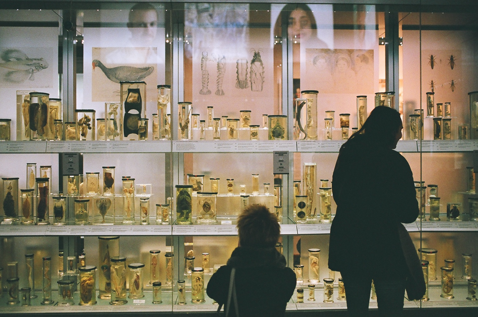 Jen, Maria and body parts in jars - Hunterian Museum.